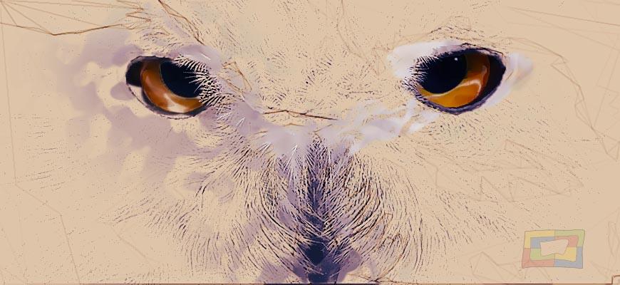 Rowling nos hace llegar el clásico de Newt Scamander sobre los animales fantásticos