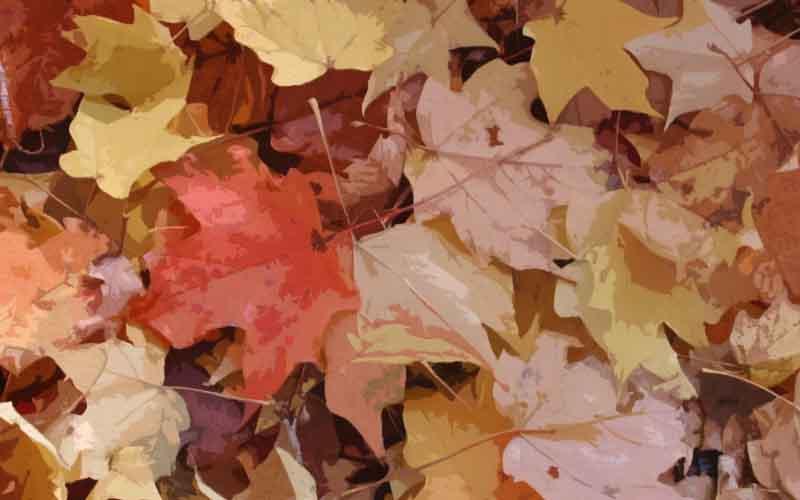 Las hojas que caen en el otoño son una imagen poética