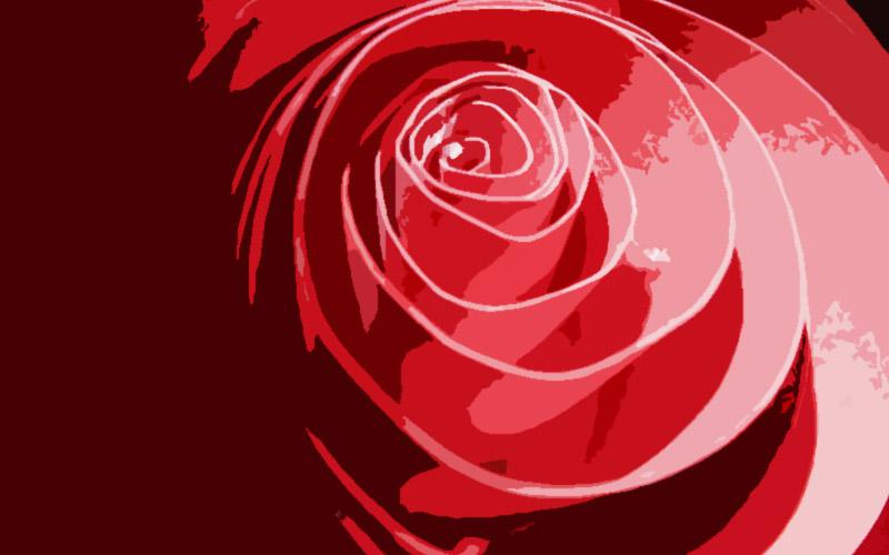 Una flor ligada en el imaginario al amor
